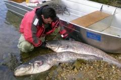 Fishing dinghies_125